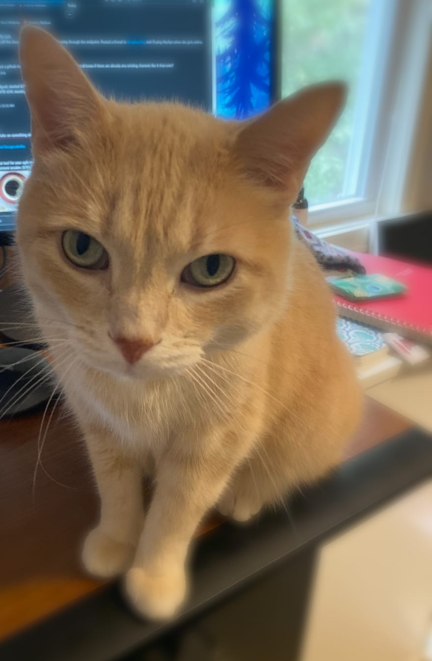 Ginger cat Wally wants love