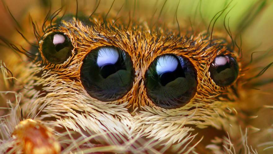 Craft Cms Debug Toolbar Spider Closeup