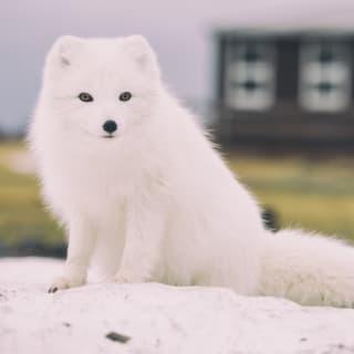 Arctic Kona profile picture
