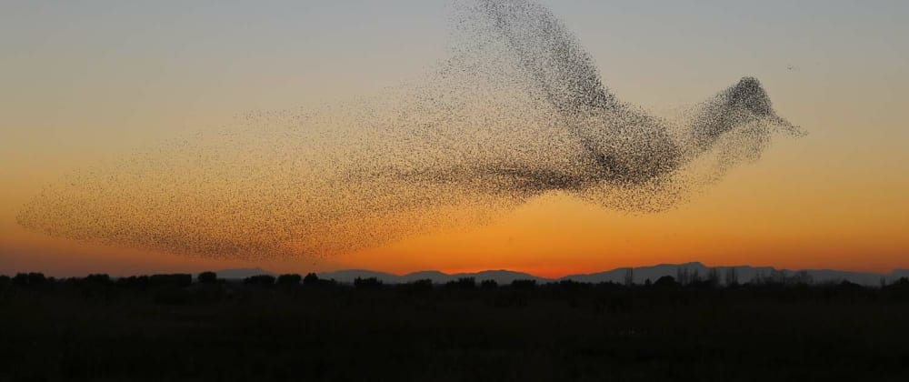 Cover image for Human Murmuration