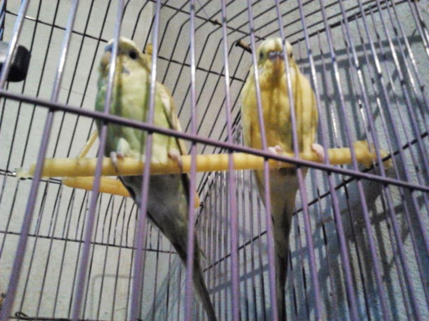 my sparrows