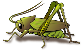 digital drawing of a cricket on a transparent background