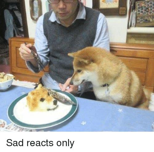 dog meme