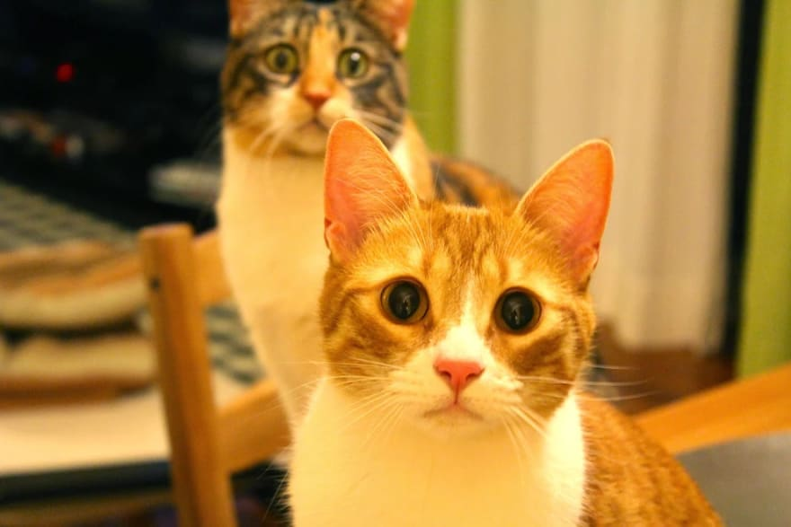 Meow have your attention please?