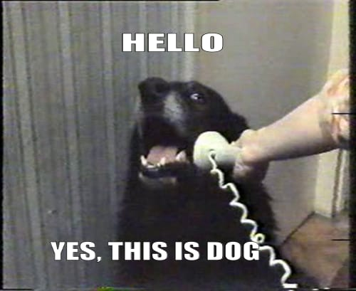 """Hello, yes this is dog"" meme"