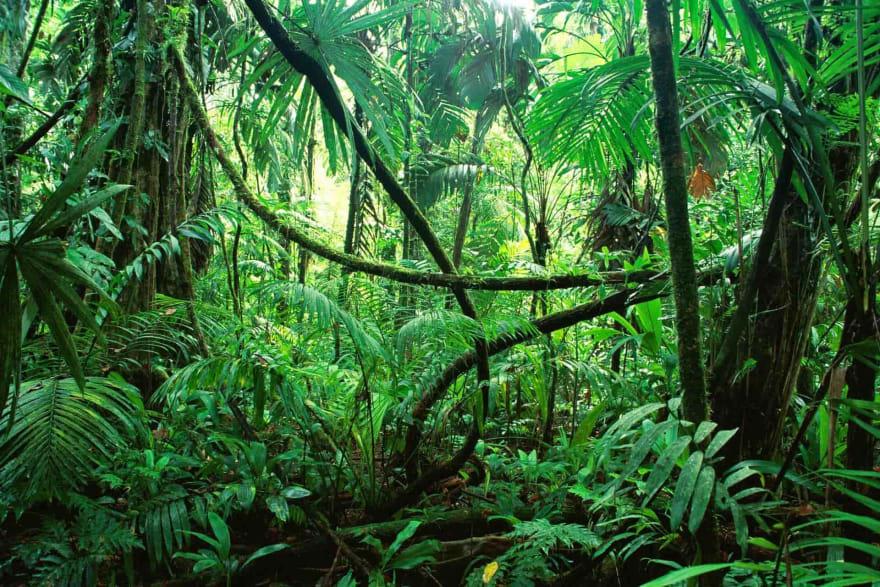 A tropical jungle