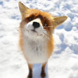 🦊 Reactive Fox 🚀 profile picture