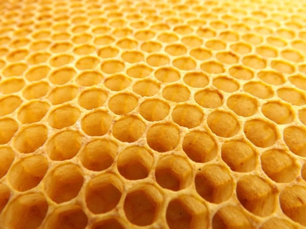 A beehive is made up of many hexagonal cells that work together