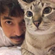 codewithcats profile