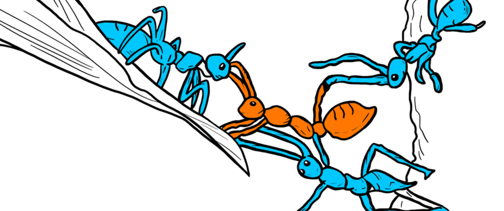 Cover image for Ant colony optimization for beginners