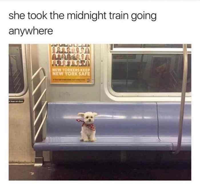 image de uma cachorrinha pegando metrô com as orelhinhas voando, dando sensação de liberdade