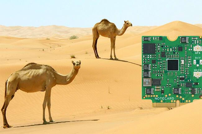 blues wireless notecard in the desert