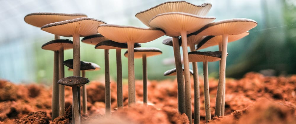 Cover image for Mushroom dataset analysis and classification in python