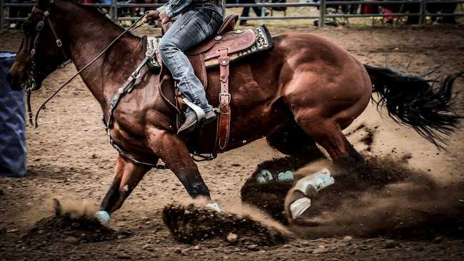 Cowboy riding horse and kicking up dirt by Lee Pigott