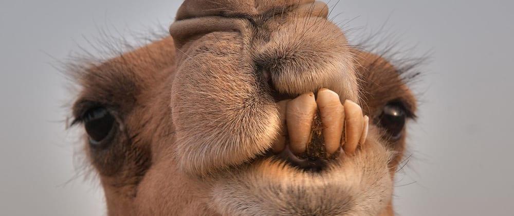 Cover image for Apache Camel #2 - Calling Rest API