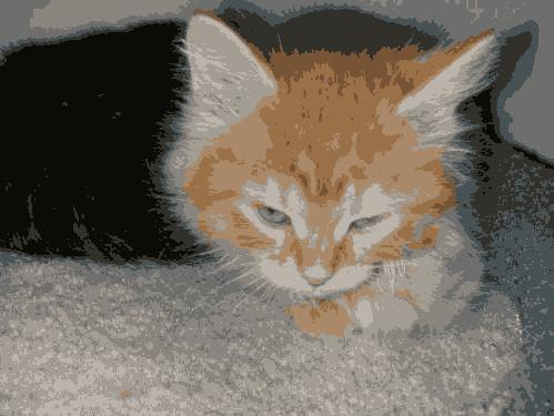 This kitten picture was compressed using K means Clustering.