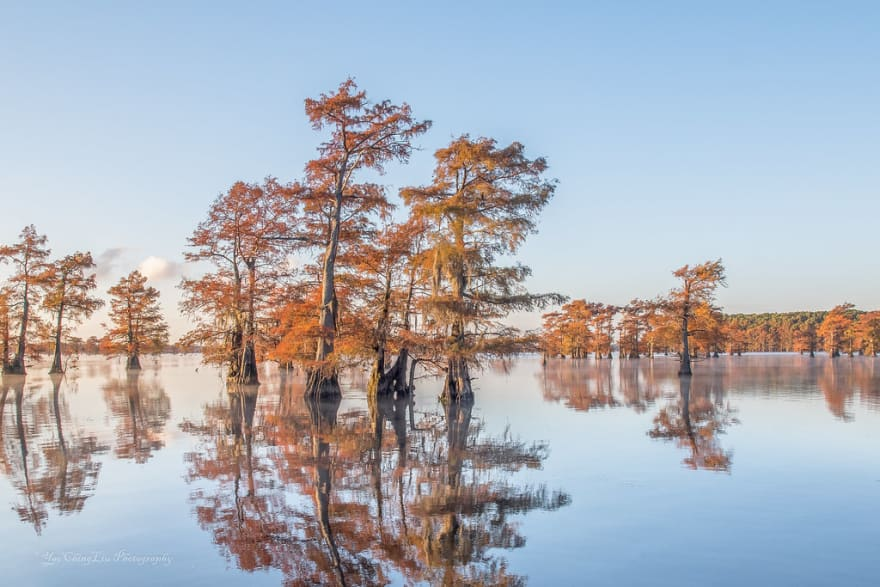 Trees mirrored in lake