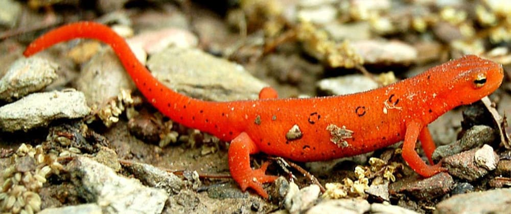 Cover image for Introducing: NEWTS