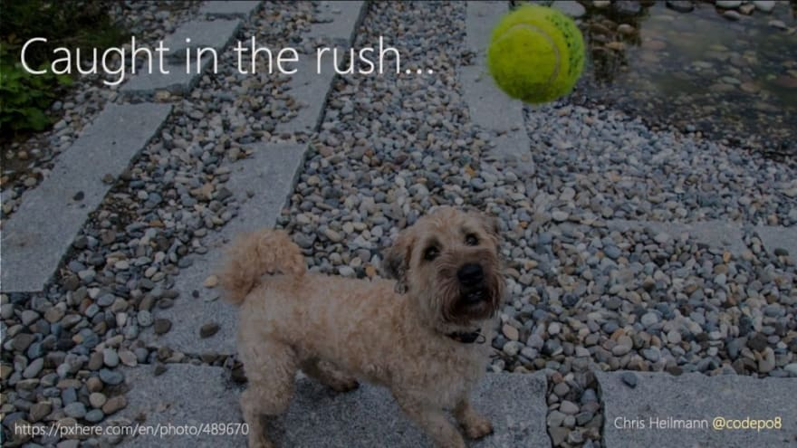 caught in the rush - a dog trying to catch a ball