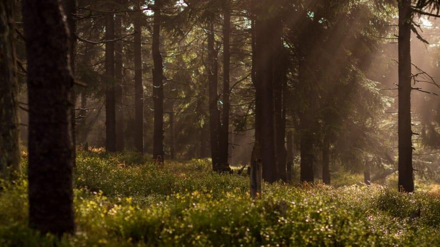 Dear Random Forest