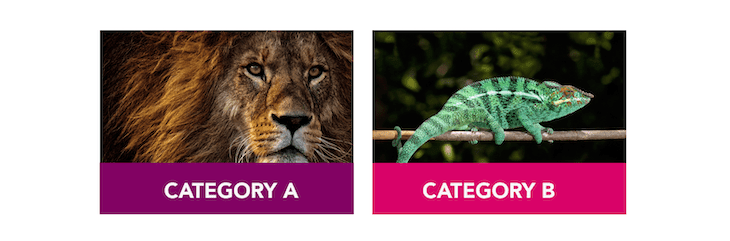 Category A And Category B: Lions And Chameleons