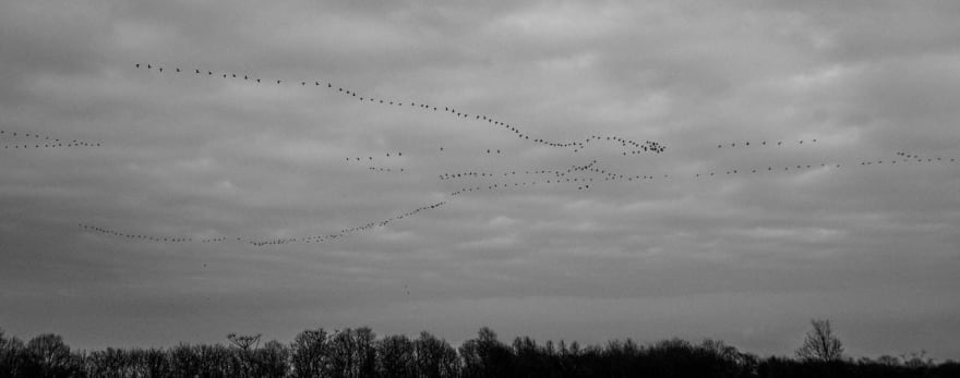 Image of migrating birds