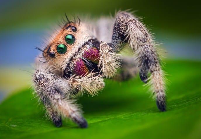 CrawlerSpider