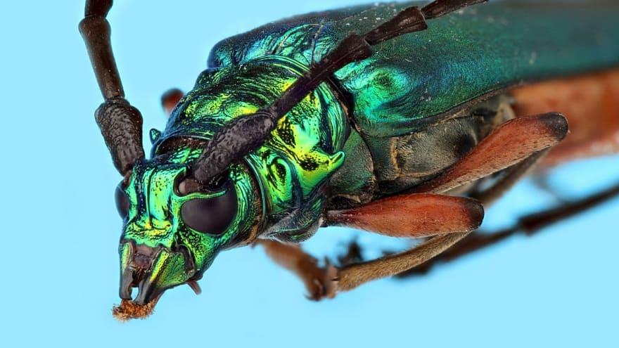 Craft Cms Debug Toolbar Insects Unlocked