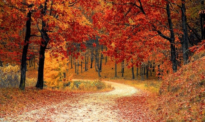 Path through the woods in autumn