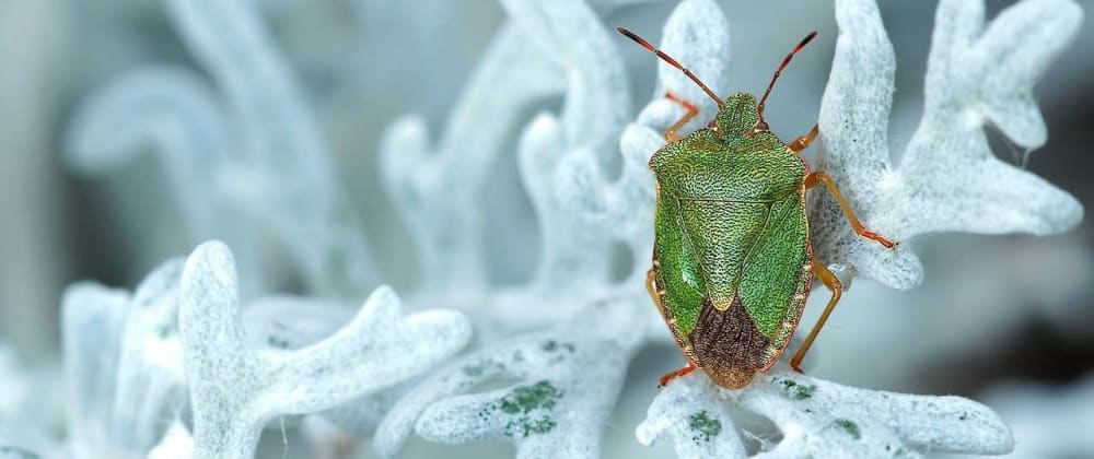 Cover image for A sorting bug