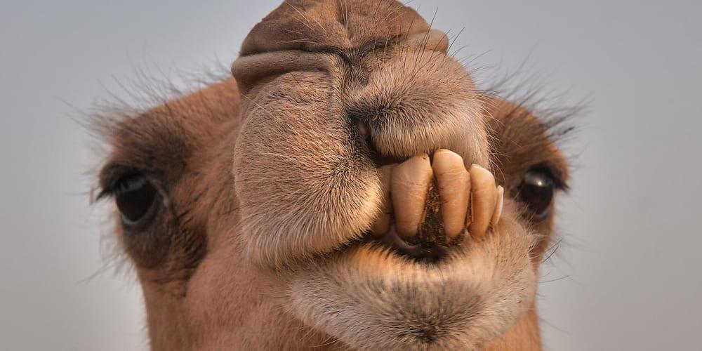 Apache Camel #2 - Calling Rest API - DEV Community 👩 💻👨 💻