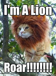 "Domestic Cat Wearing a Lion Mane. Caption: ""I'm a Lion Roar!!!!!!!"""
