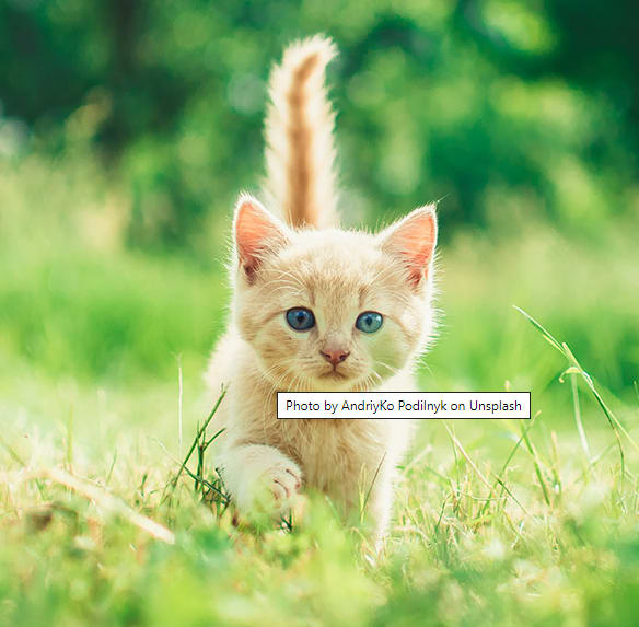 Screenshot of an image of a kitten with the title attribute appearing as a tooltip