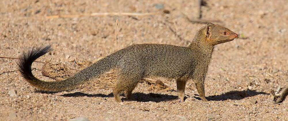 Cover image for Mongoose: Como find() funciona