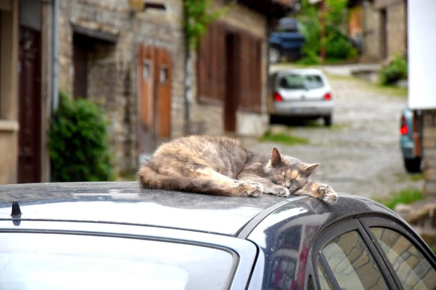 cat napping on a car