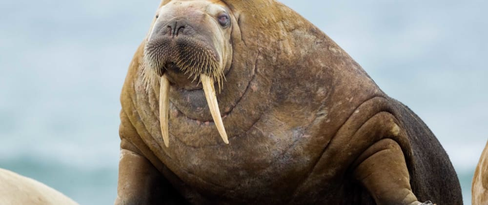 Cover image for Python's Walrus Operator