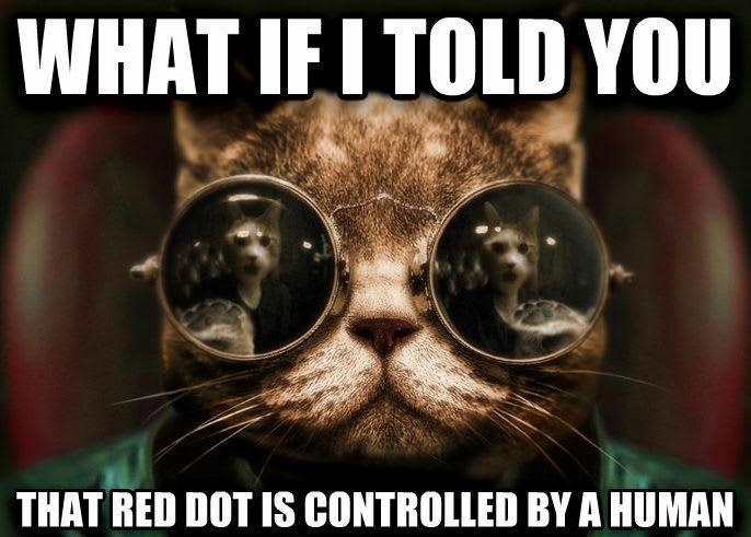 Matrix Cat
