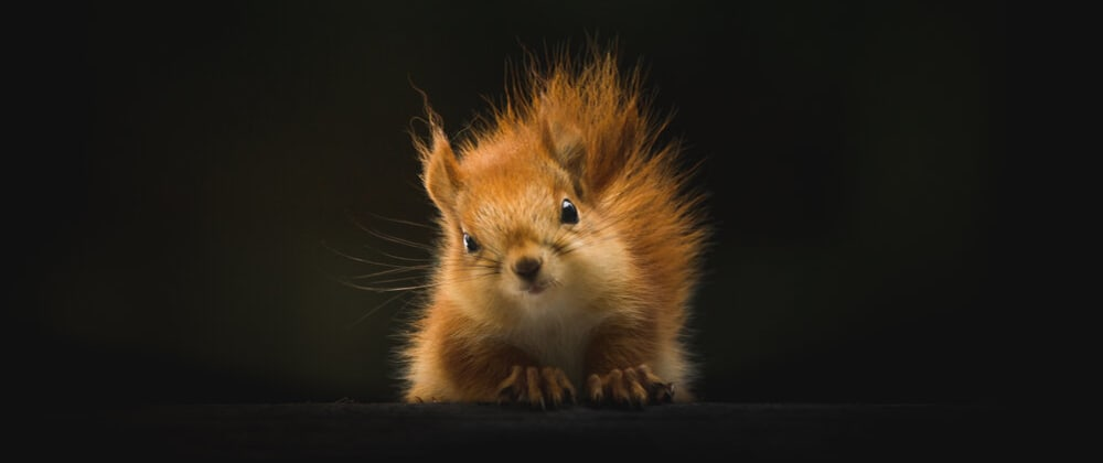 Cover image for How Cute Animals Got Me an 'A' in Data Structures & Algorithms