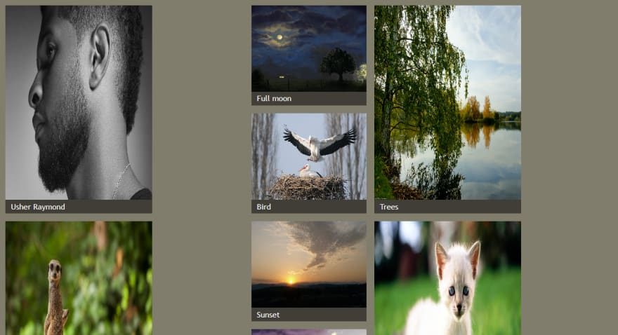 Distorted image gallery