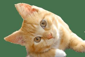 Shrunk down cat