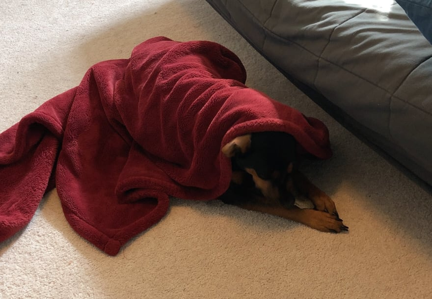 Avett wrapped in a red blanket and chewing on her bone.