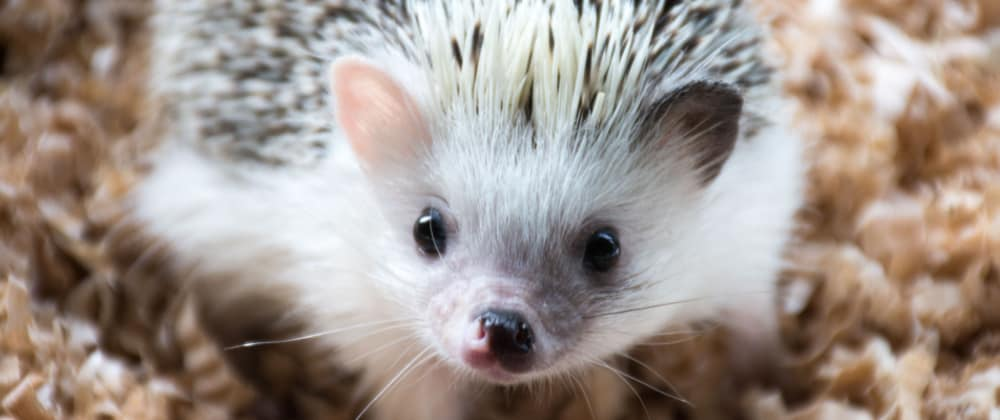 Cover image for Being a Hedgehog - Part Two