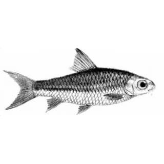 Fisk Debug profile picture