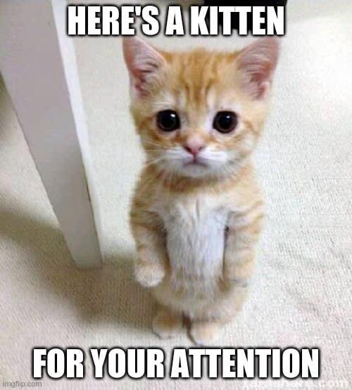 Kitten for Attention