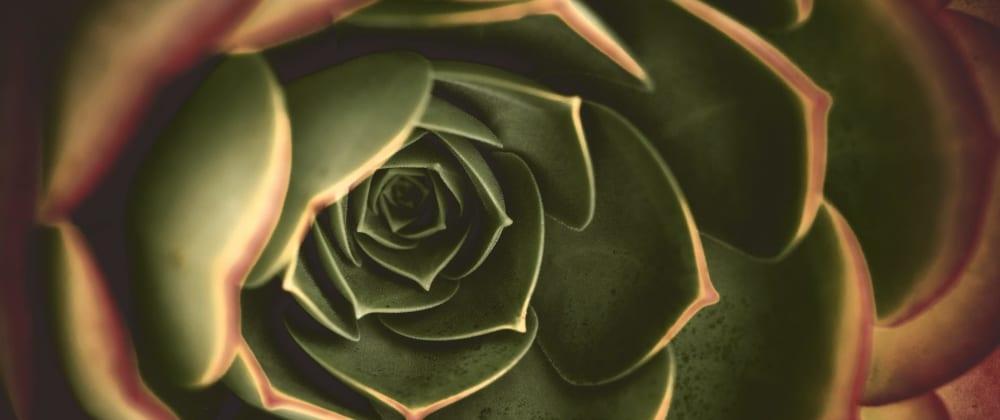 Cover image for Nature's code - a Fibonacci appreciation post
