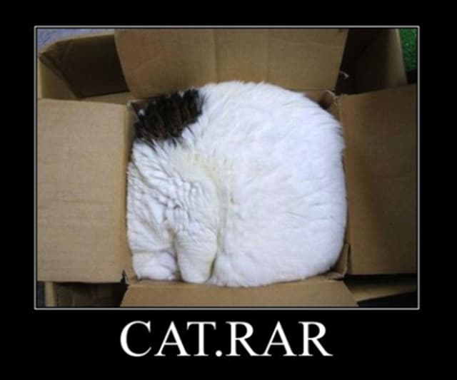 Cat in a small box with caption cat.rar