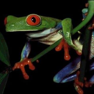 bbutlerfrog profile