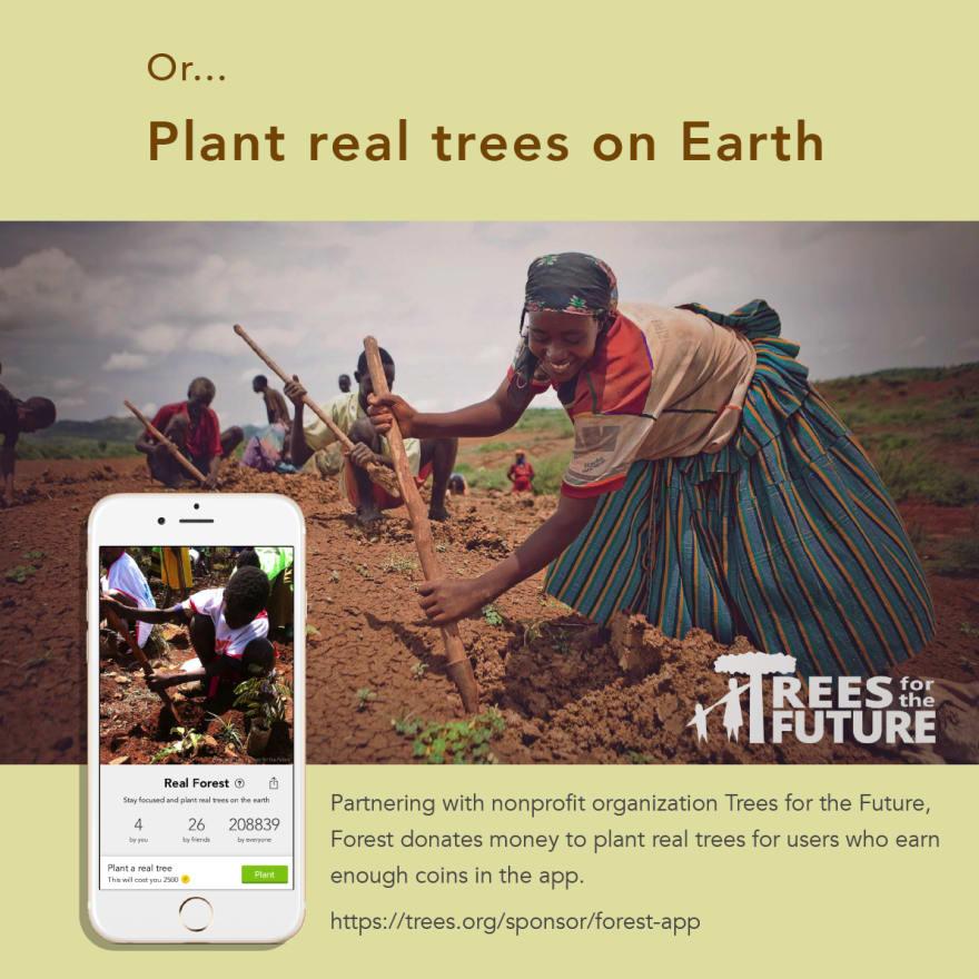 Plant real tree