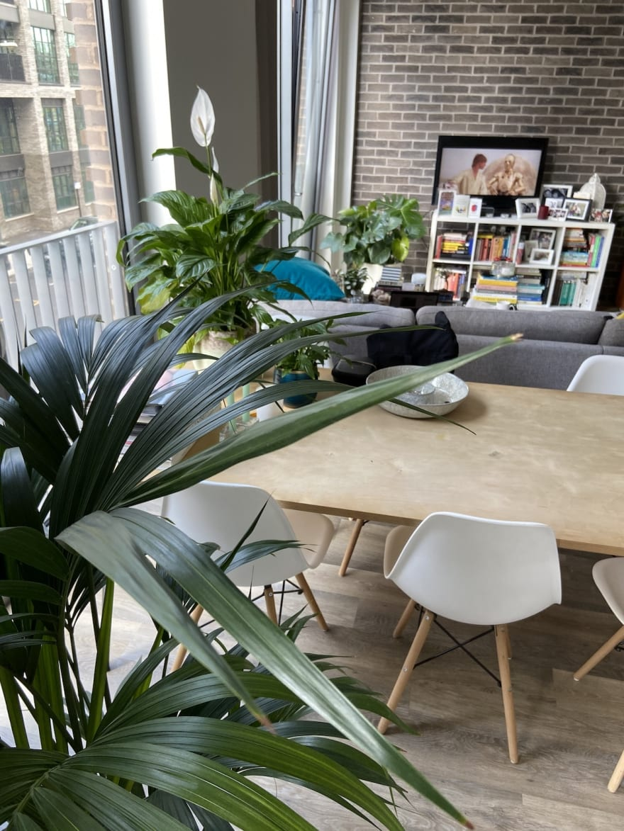Apartment living room with house plants