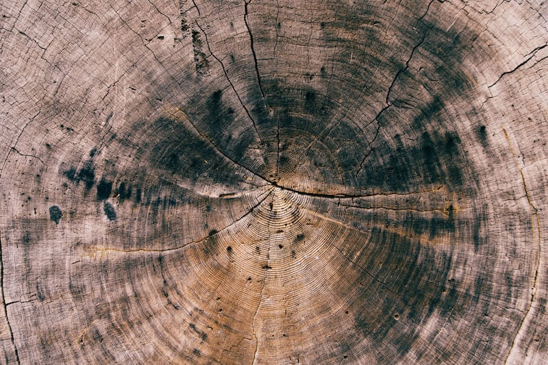Image of rings in a cross-section of a tree trunk